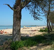 camping ile de ré plage de sable