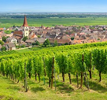 camping alsace vignobles