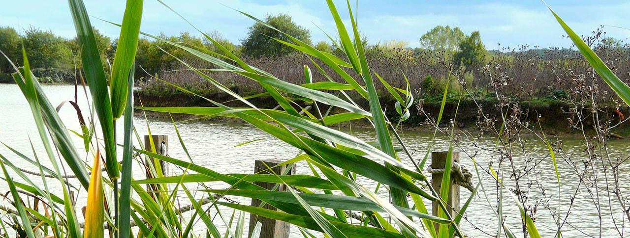 slider-pano-camping-le-lac-aux-oiseaux-1.jpg