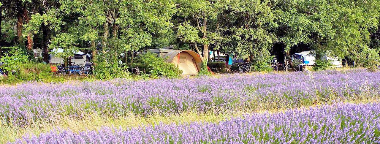 Camping Les Truffieres Drôme provencale lavande Grignan
