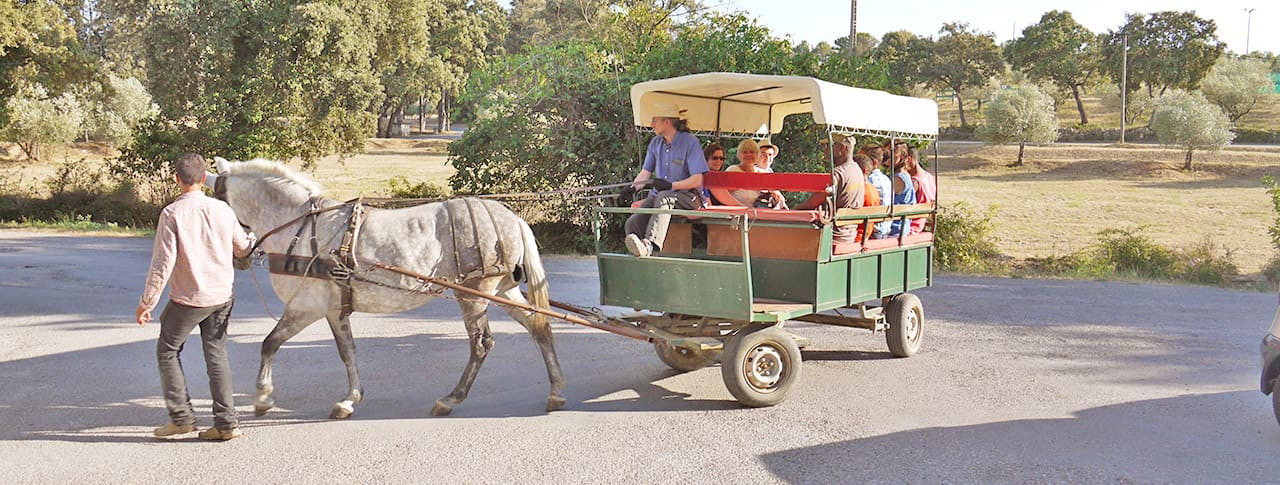 Camping Fondespierre balade cheval Montpellier