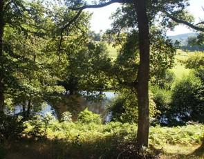murmures-du-lignon-riviere-principale-min.jpg